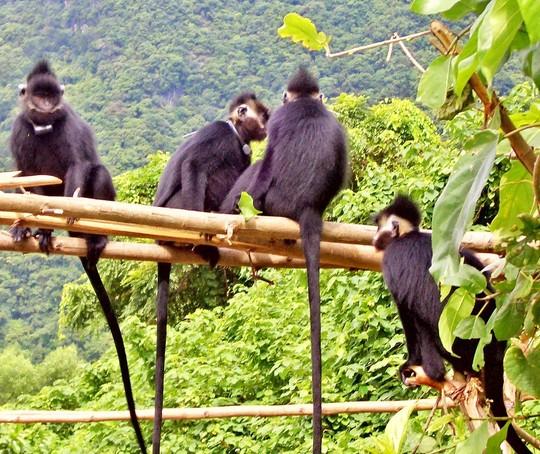 Phong Nha Ke Bang National Park Viet Nam